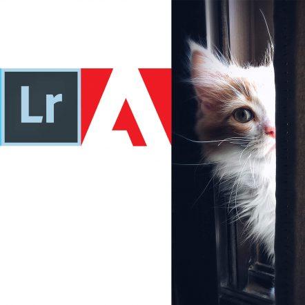 9.90 czy 19.99 czyli o cenach w Adobe 1